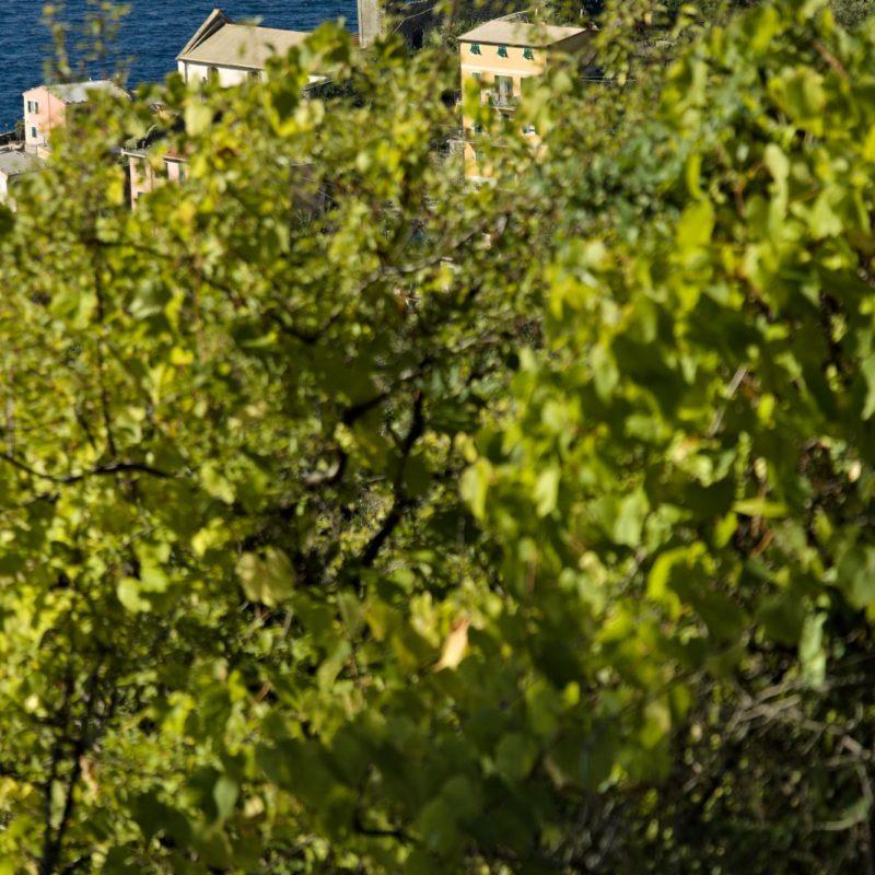 Castello di Vernazza, Cinque Terre